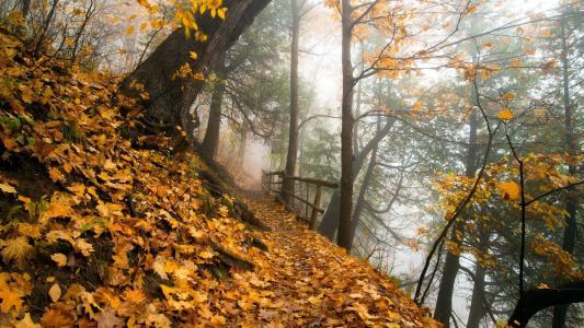 在秋天的树林中的路径