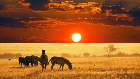 在日落时分,非洲领域的斑马