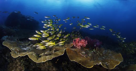 一个风景如画的海底世界的鱼群