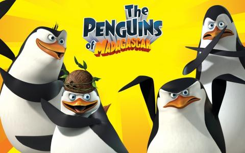 在马达加斯加的企鹅