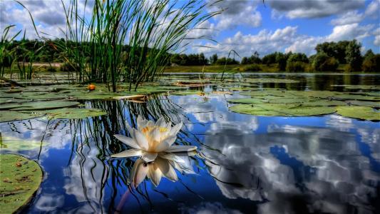美丽的莲花水面上