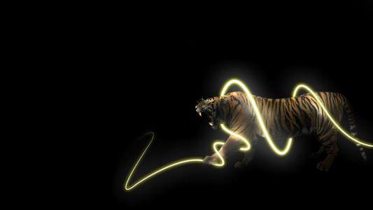 老虎在能源螺旋