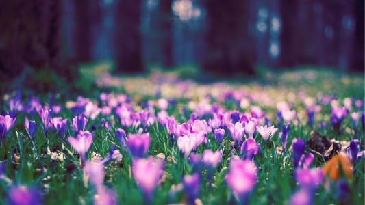 春天的花朵在公园里