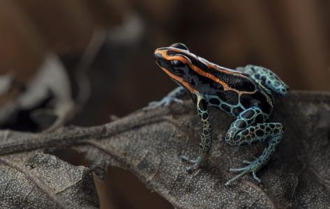 青蛙网镖坐在干燥的床单上