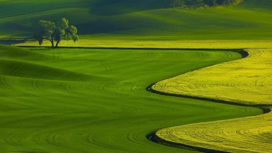 田野上的绿色色调