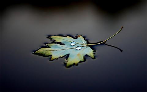 滴,黑色背景,水,反射,工作表