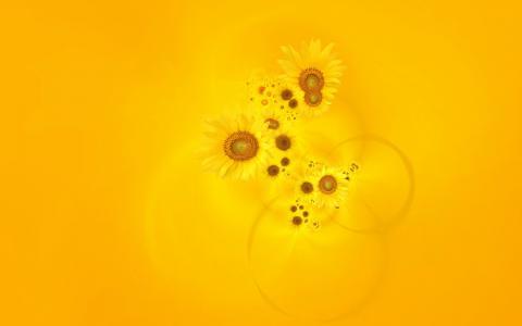 在黄色背景上的向日葵