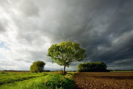 在黑暗的云彩下的一棵树