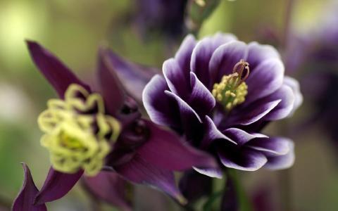 紫色的花朵,黄色的雌蕊