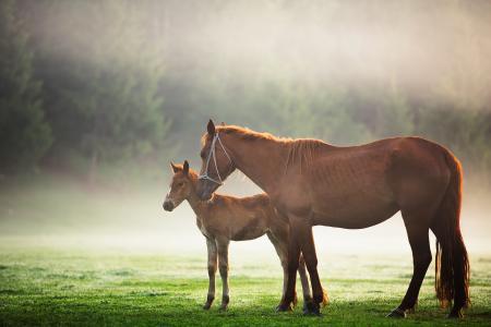 有一匹小马的一匹棕色的马在草地上漫步