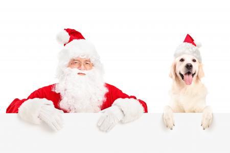 圣诞老人与狗品种新年2018年金毛寻回犬