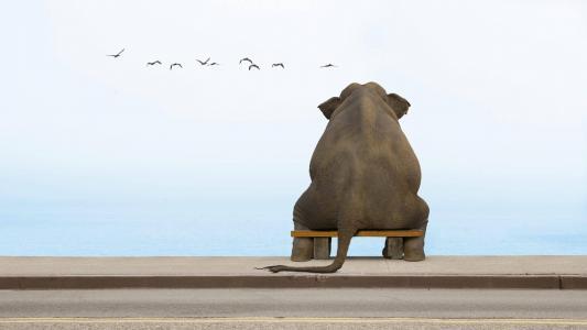 大象坐在长椅上,看着鸟儿
