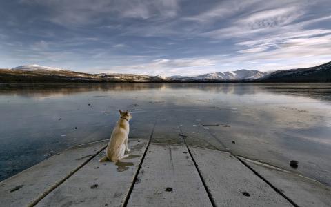 在河岸上的狗