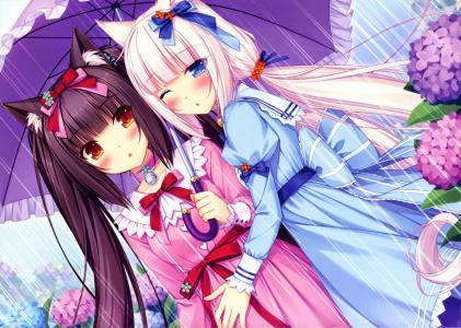 伞下的两个女朋友,动画Neko Para