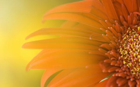 向日葵的壁纸