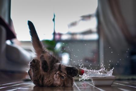 孩子小猫与水战斗