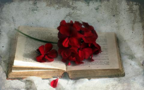 书,风格,花瓣