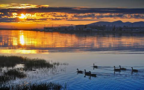 日落时分的鸭子
