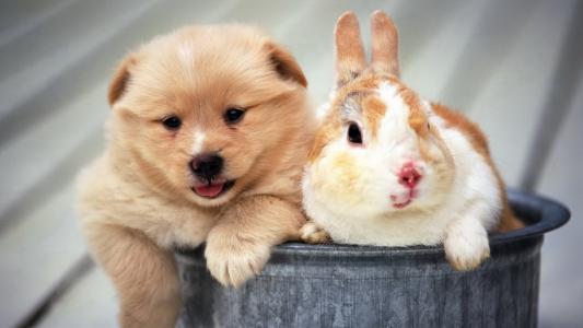 小狗和兔子