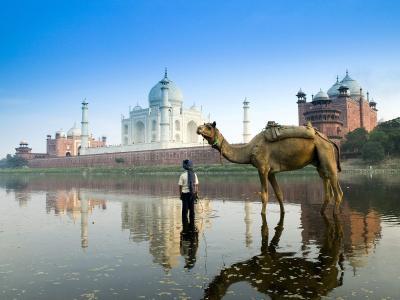 男孩与骆驼