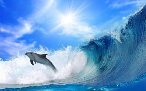 海浪前的海豚