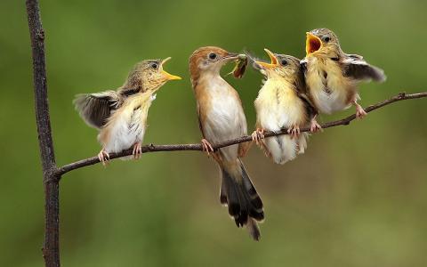 鸟在小枝上喂小鸡