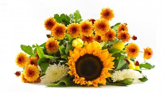 在白色背景上的菊花和向日葵花