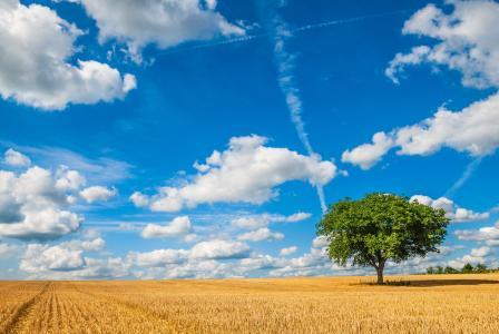 蓝蓝的天空,白云在麦田