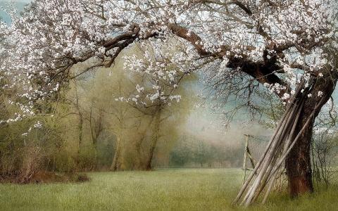 粘在一棵开花的树的树干上