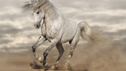 一匹美丽的白马跳过沙滩