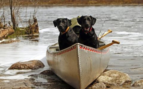 在一条船上的黑色狗