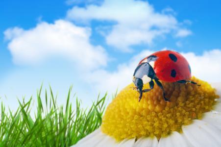 瓢虫在一朵花的黄色中间,宏指令