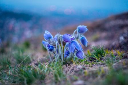 精致的蓝色野花