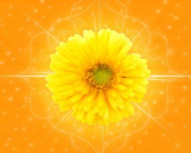 在橙色背景的黄色花