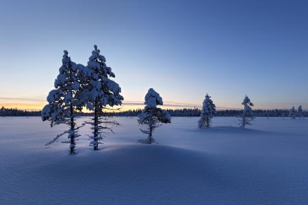冬日的阳光在雪面上升起