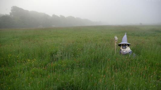 在甘道夫服装的哈巴狗在绿草中