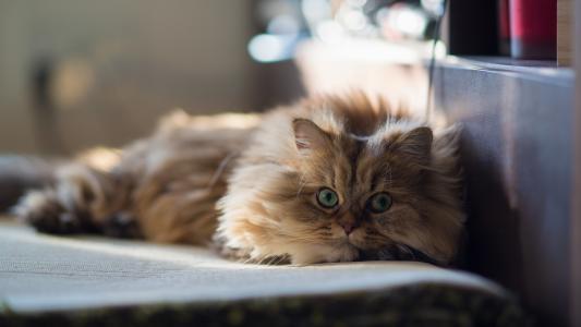聪明的猫在床单上