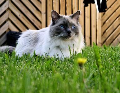 在草地上的猫布娃娃