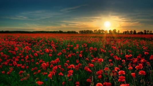 红色的花园