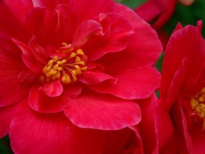 红色的大花