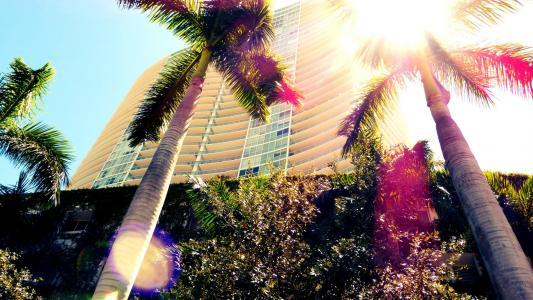 棕榈树在迈阿密