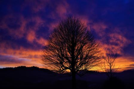 反对美丽的天空,在日落时的一棵树的轮廓在冬天