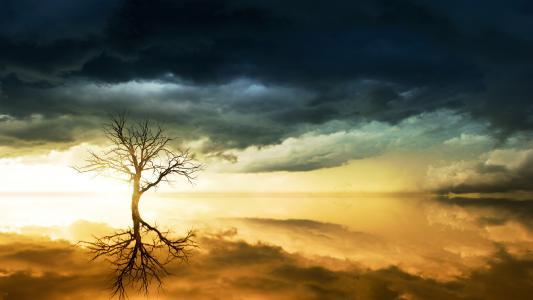 天空中的乌云和一棵树在水中反映出来