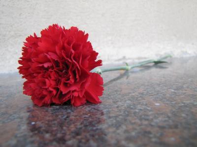 5月9日胜利日的花岗岩康乃馨