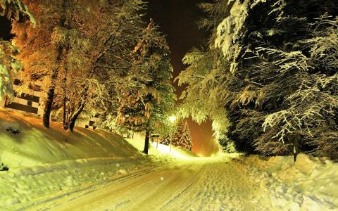 积雪覆盖的道路在森林里