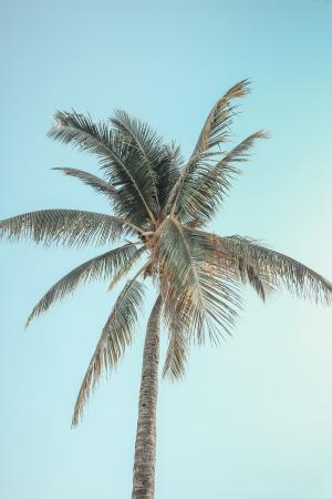 清新的椰树景色微信背景
