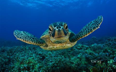 海龟在海下游泳