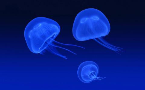 漂浮的水母