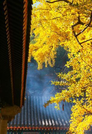 秋季北京大悲寺摄影风光