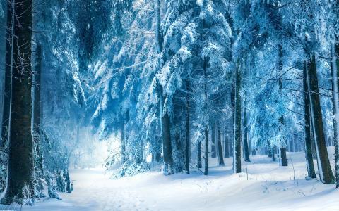 蓝色冬季森林